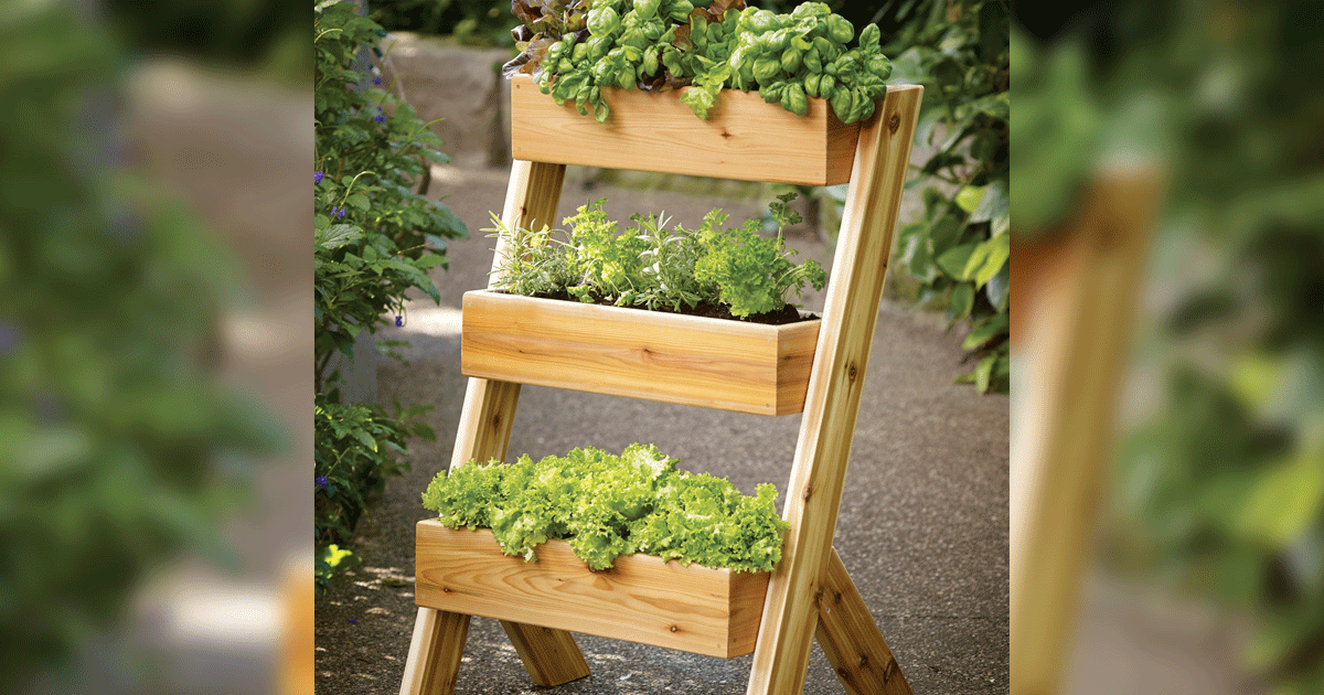 Getting Your Greens: DIY Cedar Planter